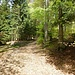 nach der Leithmooshütte geht der Waldweg in einen Steig über