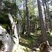 Der Pfad führt auf angenehm weichem Boden durch den Märchenwald.