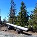 Gipfelbank mit knorrigen Bäumen