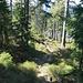 Grenzwanderweg zur Zollhütte, der Abstieg wäre auch über diesen Steig<br />möglich