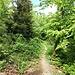 schöner Wanderweg I