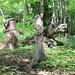 nel bosco verso Villa Luganese : sculture in legno