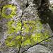 Sasso Grande : per arrampicarsi in vetta dalla via normale bisogna seguire gli evidenti bolli gialli ... fino a che non sbiadiscono !