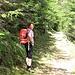 Sulla strada forestale nel Bosch del Faed.