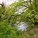 Die elegante Bogenbrücke hinter grossen Ahornbäumen