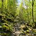 Stets wird durch schönen Wald gegangen