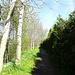 auf dem Wanderweg Richtung Birklehof