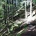 jetzt durch den Wald