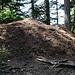 die Ameisen waren enorm fleißig. So einen großen Hügel habe ich lange nicht gesehen.