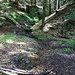 überall fließt Wasser, hier recht steil den Berg hinunter. Auch wenn es auf dem Foto nicht so aussieht.