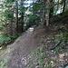 da haben sich die Ameisen eine schlechte Stelle ausgesucht, sie haben den Hügel zur Hälfte auf den Wanderweg gesetzt.
