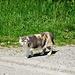 und das obligate Katzenfoto, hübsch bunt