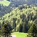 Der Mischwald präsentierte sich in kräftigen Grüntönen