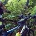 Complicato scavalcamento di alberi