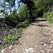 La bella strada forestale che torna a Frascarolo