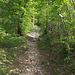 Bergweg durch den Bergsturzwald