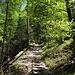 Im Anstieg durch lichten Wald mit .....