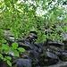 Ruine Neuhewen I