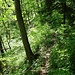 Auf dem Giesserwägli, diesmal in Richtung Walderalp. Den Abschnitt von der Klus zum Ostgrat bin ich vor einer Woche [http://www.hikr.org/tour/post120518.html gegangen].