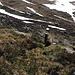 This marmot didn't mind having a photo taken.