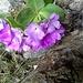 fiori al Caminetto Pagani