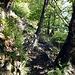 Sentiero in bosco di castagno