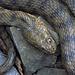 Sie haben eine ungefähre Länge von einem Meter und sind Rund 2-3 Zentimeter dick.