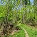 weg von der Straße, wieder in den Wald