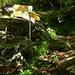 bivio per Pincascia con natura verde smeraldo