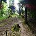 in den Wald