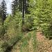 und durch lichten Frühlingswald