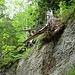 Holzskulptur: da muss man einfach stehen bleiben und sich wundern