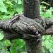 Zaun, gefertigt ohne Nägel und Schrauben, Zwischen Grossegg und Buurenboden