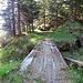 Ponte di legno, ancora 3km all'arrivo