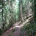 durch lichten Wald
