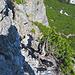hier geht es links neben dem Bergkiefer Bäumchen quer durch die Wand hinunter.