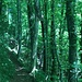 Auf schmalen Pfaden durch den Wald - toll !