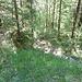 Aufstieg noch im kühlen Wald