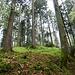 stimmungsvolle Waldpassage 2