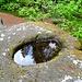 Der Beckenfels ist ein berühmter Felsen hier oben. Vermutlich heißt er so nach dem  Becken, das sich auf seine, Plateau gebildet hat (steter Tropfen.... oder geile Blutopfer der wilden Heiden? Wer weiß?).