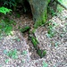 Eins der beiden offenen Hügelgräber. Man erkennt noch die hochkant gestellten Steinplatten, zwischen denen die Leiche lag. Darüber wurden Erde und Steine zu einem Hügel aufgehäuft. Die Gräber stammen aus der Merowingerzeit, begraben wurden hier wohl Angehörige des Klosters oder Mitglieder der Herzogsfamilie.