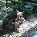 ...und vielen geschnitzten Tierfiguren, die hier im Wald stehen.