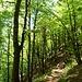 Zunächst geht's sanft durch Bergwald.