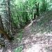 Bald gewahrt der Hohneck-Abenteurer rote Punkte an Bäumen und Felsen, und gelegentlich noch ein paar außer Dienst gestellte Schilder, die dasselbe Zeichen tragen. Wie so oft hat man auch hier, als der Weg aufgelassen wurde, am Anfang bzw. Ende die Schilder entfernt, sich aber nicht die Mühe gemacht, restlos alle abzunehmen.  An dieser Stelle muss man aufpassen, weil hier von oben (vom Col du Schaeferthal) ein Pfad an den Rotpunktweg stößt. Wenig später kommt auch der erste von unten.