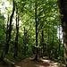 Im Wald kurz vor dem Col de la Schlucht.