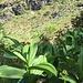 Tra le piante