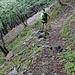 sentiero Lozzo-Piero