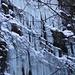 Foto vom 23.1.2010 - 1. Versuch Dent de Vaulion:<br /><br />Eiswand beim Eingang zur Grotte de l'Orbe. Direkt unter den Eiszapfen tritt die Orbe aus dem Fels.