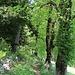 Im Abstieg vom Chaumont.