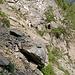 Der rutschige Weg durch den Steinbruch ist jetzt ausgebessert